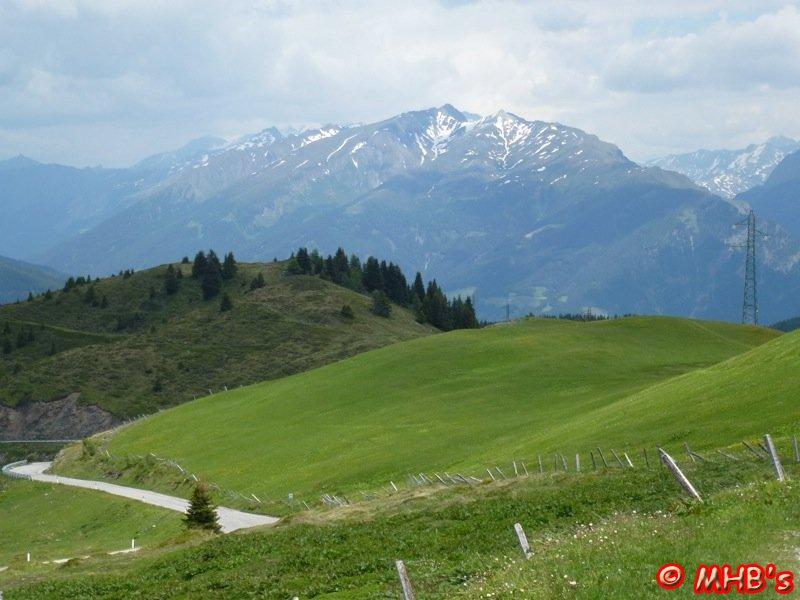 Pinguin_Alpen_06_2014_019