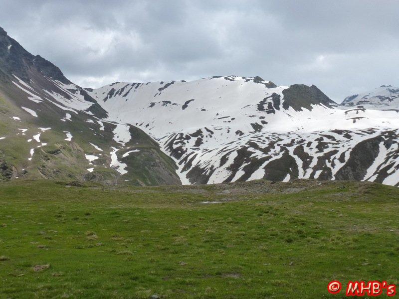 Pinguin_Alpen_06_2014_034